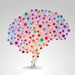 nodos redes cerebro